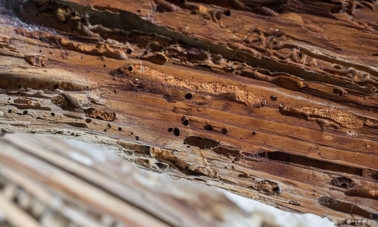 poutre en bois endommagée